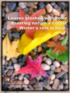 Leaves blushed with colors create nature's carpet