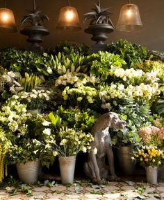 love the dog and all the fresh flowers. Love Flowers, Vintage Flowers, Fresh Flowers, Beautiful Flowers, Flower Shop Interiors, Flower Market, Flower Shops, Garden Shop, Flower Designs