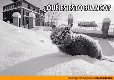 Un gato descubre la nieve.  ¿Qué es esto blanco?