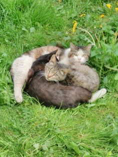 Go on, get! This is our cuddle pile!