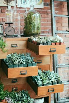 Cute little plantie drawers!