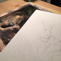 Store papa løve og hans lille efterkommer begynder at tage form på papiret. Igen er det den dygtige @fronsholt som har fanget et fantastisk øjeblik i @copenhagenzoo . __________________ . Papa lion and his little cub is starting to show in my new drawing. . #lion #wildlifeart #zoo #drawing #tivolicph #tegneværkstedet #løve #copenhagen #copenhagenzoo #drawdoodlesstudy #draw_doodles_study
