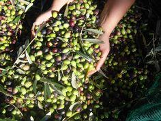 Olive oil handmade