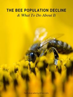 In the 1950′s, the honeybee population numbered 5 million strong, while today despite the advent of improved farming methods and technology, the bee population has dwindled to 2.5 million. A significant loss considering that one out of every three bites of food has been pollinated by a honeybee.  What has brought us to this point? And more importantly, what can we do about it?