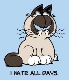 A Grumpy Cat and Garfield mashup. There's nothing special about Mondays.this grumpy cat hates every day of the week! Grumpy Cat Movie, Grumpy Cat Images, Grumpy Kitty, Kitty Kitty, Funny Cats, Funny Animals, Cute Animals, Funny Good Morning Memes, Garfield And Odie