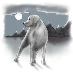 A Dog's Tale about Tails. One of my favourite characters in my latest children's book release, Tails, is Buster Boy. A Dog's Tale, Hunting Season, Book 1, Labrador Retriever, Thoughts, Dogs, Silver, Character, Animals