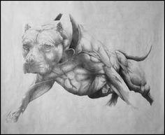 American Pitbull terrier , Apbt , Pitbull , Pit bull Puppy , ADBA , Rednose , Rednose puppy , APBT , Game dog , Working Pitbull , Conditioned Apbt , Bull dogs, Real pit bulls, Buck skin , Black Apbt , Bulldog , Dog men , #Pitbull #Dog