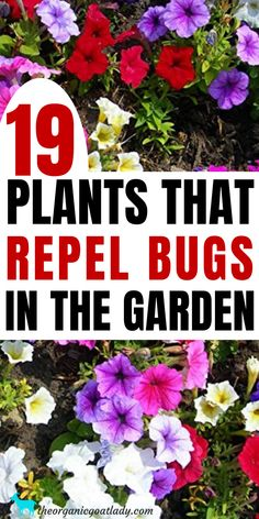 Best Plants to Repel Bugs, Natural Pest Repellent, Gardening Tips, Gardening DIY, Plants that Repel Are you tired of losing your garden crop to the bugs? Plant these 19 plants that repel bugs in and around your garden to have a successful harvest! Garden Bugs, Veg Garden, Garden Pests, Lawn And Garden, Harvest Garden, Vegetable Gardening, Garden Insects, Bonsai Garden, Edible Garden