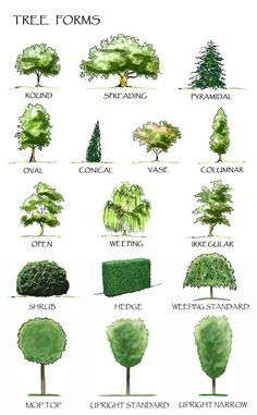 Image result for pine tree function in landscape