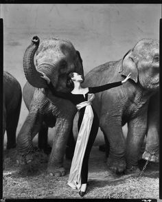 Dovima with Elephant, Richard Avedon