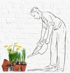 Percy watering the daffodils