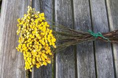 Dried Flowers, Yellow Tansy.  www.etsy.com/shop/NaturesCraftSupply