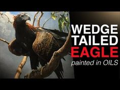(885) How to paint BIRDS | The Majestic WEDGE TAILED EAGLE | Oil Painting Tutorial - YouTube