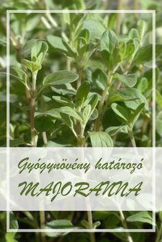 Medicinal Plants, Beautiful Gardens, Herbalism, Spices, Medical, Herbs, Wellness, Health, Salud