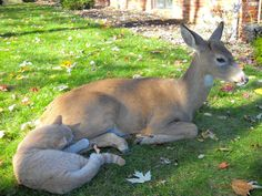 A deer visits this cat every morning in Harrisburg, Pennsylvania. - Imgur