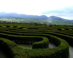 The Peace Maze at Castlewellan, Co. Down, N. Ireland. It is the 2nd largest hedge maze in the world with over 6,000 yew trees.