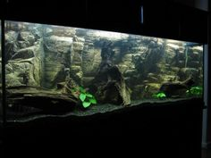 This Is A 155 Gallon Tank Whew Had To Have Taken Forever To Build Aquarium Tropical Fish Aquarium Fish Tank