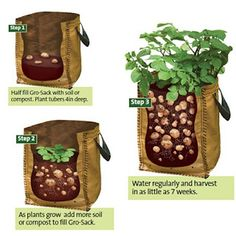 These bags not only look great but could be so convenient on the balcony, patio or in the garden. The instructions are easy and potatoes just keep multiplying. A great crop for a small investment &  good for the new gardener to gain confidence.