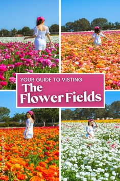 Your Guide to Visiting The Flower Fields in Carlsbad | Spring in California is a beautiful time of year. There are so many amazing flowers fields in CA and one of the best to see is The Flowers Fields in Carlsbad. The Flowers Fields Carlsbad has over 50 acres of colorful ranunculus flowers. Here is everything you need to know about visiting and getting some flower fields aesthetic photos! Ways To Travel, Travel Tips, Ranunculus Flowers, Explore Travel, Bright Flowers, Photography Workshops, California Travel, Plan Your Trip, Amazing Flowers