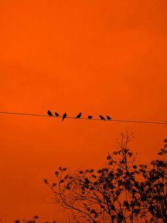 The Birds. *dun dun dunnnn* | Flickr - Photo Sharing!
