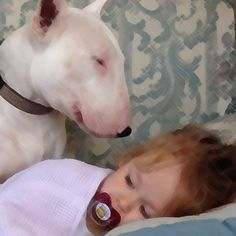 #Bully Love – The Story of Layla & Alfie March 9, 2016 by Mark Watson The Story of Layla and Alfie – #BestFriendsForever