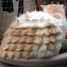 Cat lying up against a piece of mesh creating a crazy fur pattern.