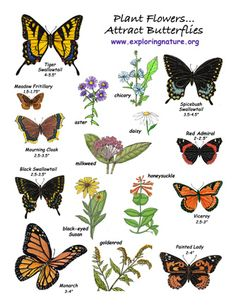 A simple chart with some common butterflies and nectar-rich wildflowers, via Exploring Nature