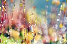 bejeweled | Flickr - Photo Sharing!
