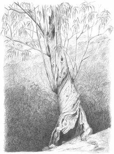 Peter Tugwell. On The Track To Wineglass Bay. #australianeucalyptus #sydneyartist #mosmanmarkets #australianflora #artistsoninstagram #handmadecanberra #sydneycreatives #tree #interiordesign #interiorart #foryourwall  #sketch #sketching #draw #drawing #pencil  #galleryart #arte #illustration #artwork #artist #art #fineart #traditionalart #creative #creativity #progress Led Pencils, Pencil And Paper, Cockatoo, Artist Art, Traditional Art, Sketching, Art Gallery, Creativity, Track