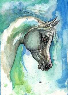 Grey arabian horse original pen and watercolor by AngelHorses