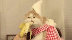 cat eating banana funny gif