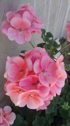 Una hermosa flor, llena de elegancia y sencillez!!!!
