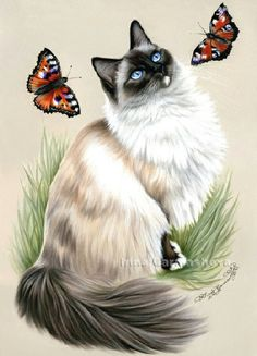 Cat Art...=^.^=...❤...Ragdolls Which One To Catch...By Artist Irina Garmashova Cats...