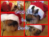 Merry Christmas!! - GOD JUL! from Dexter in Norway - by Inger Johanne