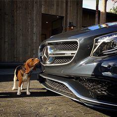 The beagle and its 'Benz. Photo shot by @joshrubin.