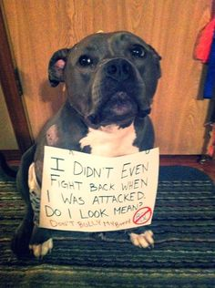 Stop giving Pits a bad rap. I <3 Pitbulls.