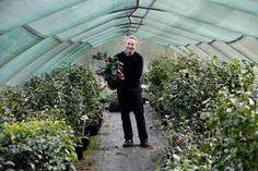 Jonathon Jones with Camellias at Tregothnan