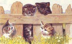 красивые картинки для декупажа трогательный котенок: 6 тыс изображений найдено в Яндекс.Картинках