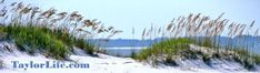 Planning a beach vacation trip? Consider Pensacola for a great family vacation. This family-friendly area offers much more than just a beach. Travel ideas offered by a Pensacola native that loves the town and calls it home.