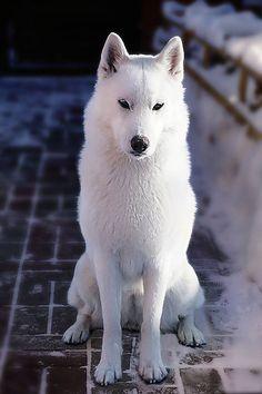 Demidoff Teona Snow Princess aka Thyone - SAVE THE WOLVES