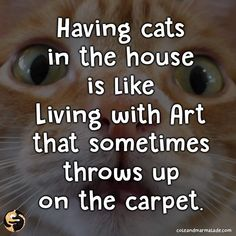 Very True - World's largest collection of cat memes and other animals Cat Love Quotes, Funny Quotes, Crazy Cat Lady, Crazy Cats, Funny Photos Of People, All About Cats, Cat Facts, Cat Life, Cat Breeds