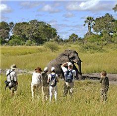 Stanleys Camp  http://www.africanwelcome.com/botswana
