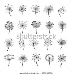 Dandelion vector silhouettes. Hand drawn dandelions with seeds icons