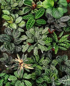 Indoor Garden, Garden Plants, Indoor Plants, House Plants Decor, Plant Decor, Calathea Plant, Decoration Plante, Inside Plants, Plants Are Friends