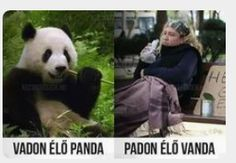 Panda Bear, Funny Moments, Funny Cute, Animals And Pets, Bff, Funny Jokes, Haha, Funny Pictures, In This Moment