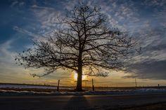 Sunset tree...