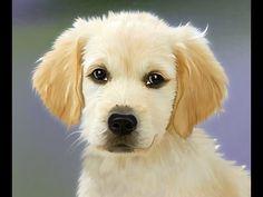 """Los cachorros insistimos, """" los políticos"""" no son hermanos nuestros... - YouTube"""