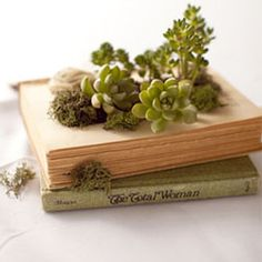 Book Planter with Succulents