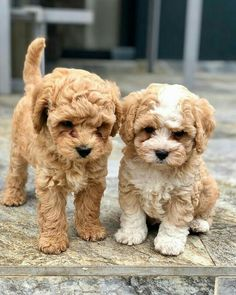 We Shared For You Cute Dogs And Puppies, They are so cute and lovely, please do not hurt them. Animals never leave you alone. Really Cute Puppies, Super Cute Puppies, Cute Baby Dogs, Cute Little Puppies, Cute Dogs And Puppies, Baby Puppies, Cute Little Animals, Cute Funny Animals, Cute Babies