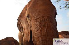 Für die Aufzucht der verwaisten Elefantenjungen, sind wir dringend auf Unterstützung angewiesen. Bitte übernehmen Sie eine Patenschaft für einen Elefantenwaisen.  www.aga-artenschutz.de/elefantenpatenschaft.html Nairobi, Aga, Html, Elephant, Animals, Wildlife Conservation, Elephants, National Forest, You're Welcome